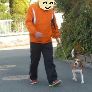 ビーグル犬のお散歩練習